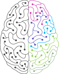 Image of a brain one side is multi-coloured the other is grey depicting our neurodiversity challenge and that not everyone works the same way